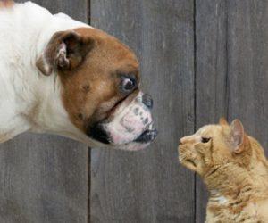Cat vs Dig